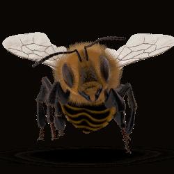 Bee Las Vegas