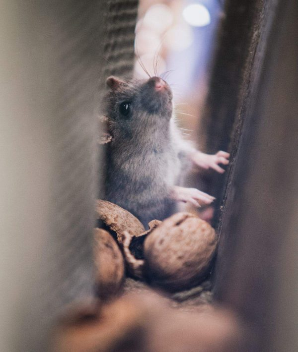 pest control for homes in vegas
